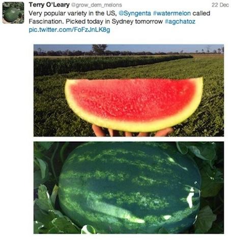 Melons 2jpeg